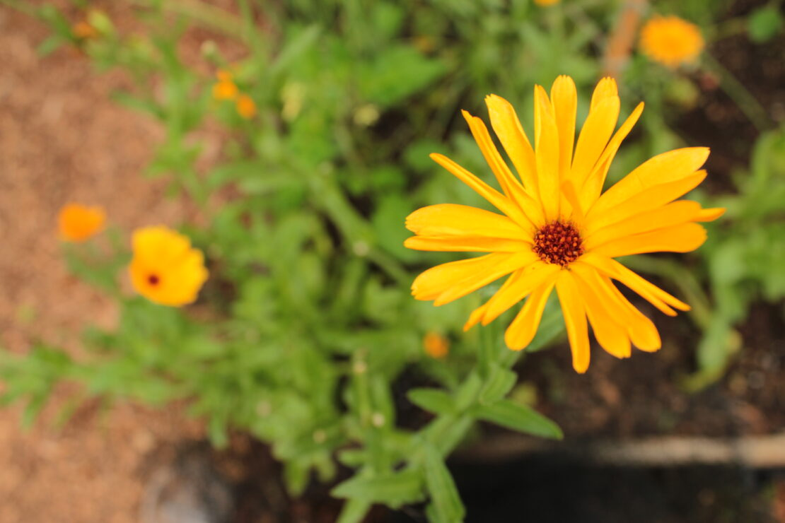 Organic Vegetable Plants, Herbs & Seeds - Growers Organics