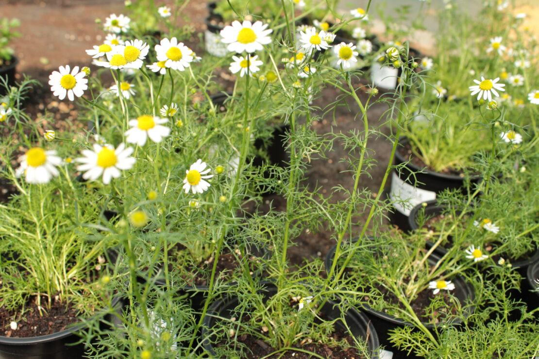 Organic Plants at Growers Organics Nursery, Kitley Farm, Yealmpton Devon