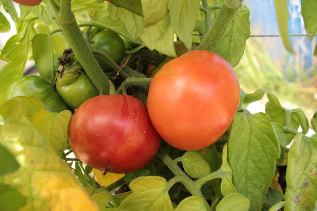 About Growers Organics Devon
