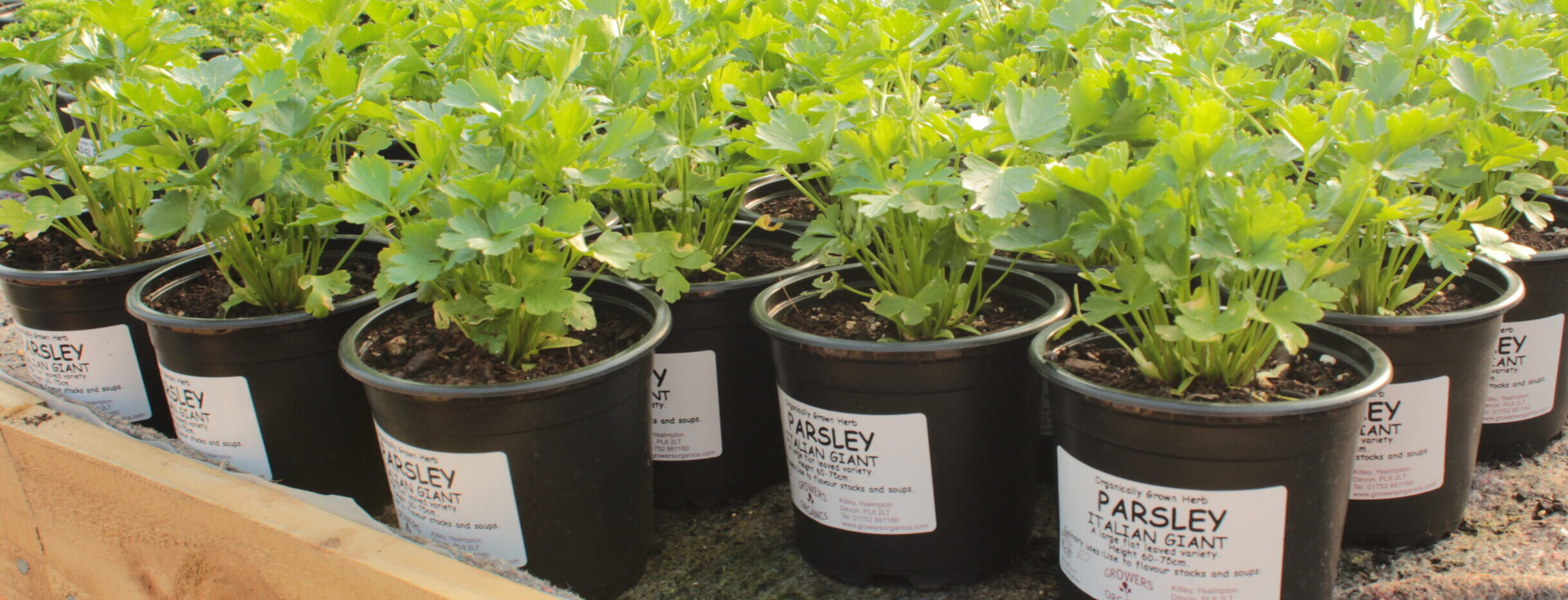Organic Herbs Online Growers Organics